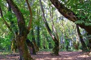 THREE CHANIA FOREST 800